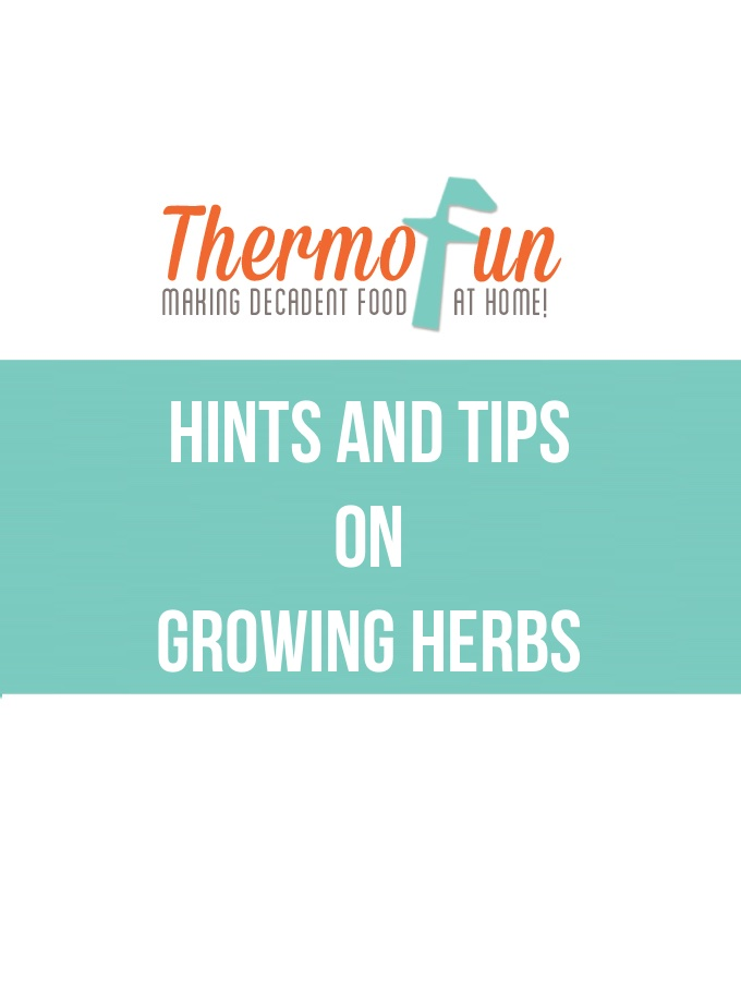 ThermoFun – Hints & Tips on Growing Herbs
